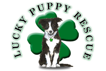 Community Beach Cleanup for Lucky Puppy Rescue